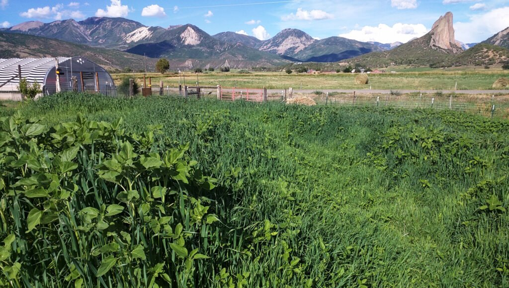 Cover crops growing
