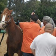 adults-working-with-a-horse