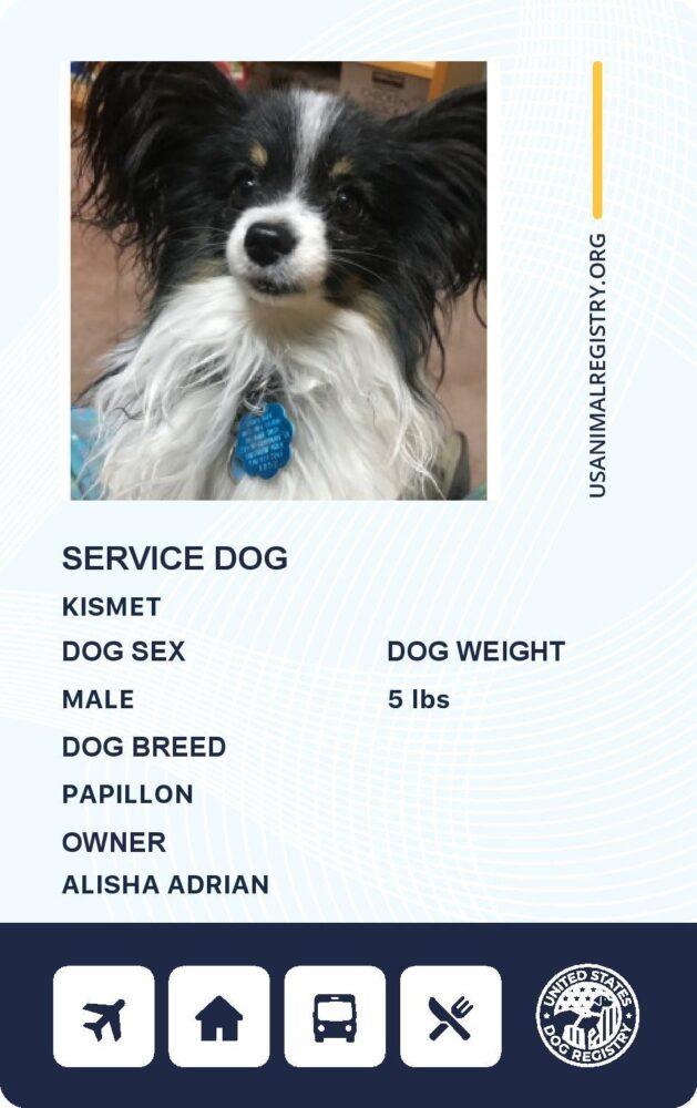 certified service companion dog