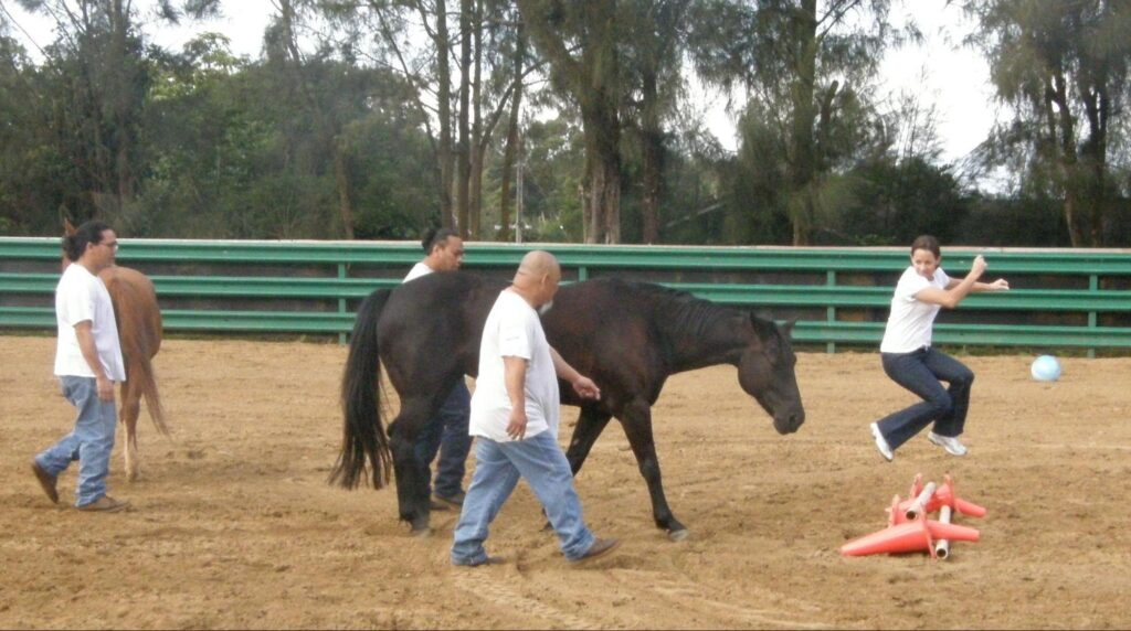 horse therapy session