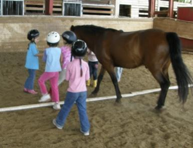 kids working with a horse