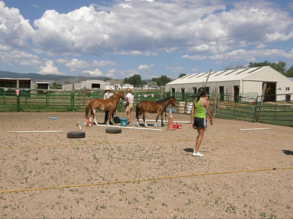 kids playing with horses