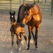 mother and foal horse