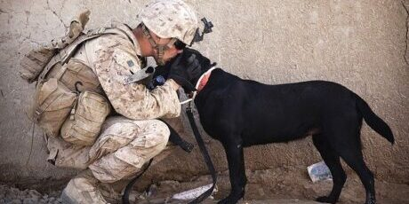 soldier meeting dog